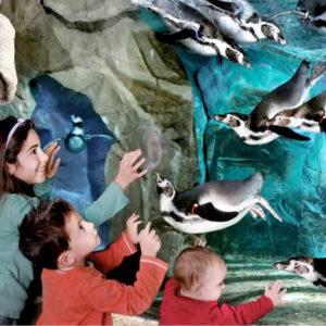 Cattolica's Aquarium
